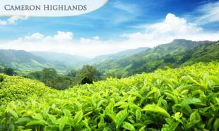 60% OFF Cameron Highlands Family Holiday: Stay 2D1N in Crown Imperial Court, Brinchang (3 Bedroom Apartment) for up to 6 people. From RM30 per person per night.  